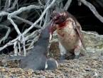 Pingvin ulovio ženu s drugim, završilo je krvavo