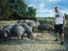 Vida ima farmu crnih svinja, a u Rusiju je ''prošvercao'' kulen