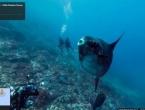 Istražite podvodni svijet oceana uz Google Street View