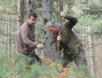 Šumarija Tomislavgrad posadila 5 tisuća sadnica divlje trešnje