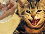 Parazit iz mačjih crijeva uništava rak