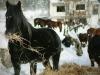 Lizoperci: Oaza Bosanskog brdskog konja uz obalu Jablaničkog jezera