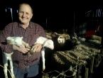 Posao za umirovljenike: Dva janjeta donesu više novca od mirovine