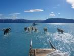 Psi vuku sanjke kroz otopljen Grenland