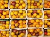 Podravka će braniteljima u BiH otkupljivati tisuće tona voća i povrća