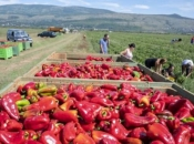 Komasacija u Hercegovini put za tisuće novih radnih mjesta