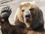 U blizini Kupresa teretnjak udario u medvjeda