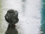 U Bosni oblačno sa slabom kišom, u Hercegovini djelomično vedro