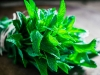 """Mnogima nije omiljena, ali ova ljekovita biljka će vas """"spasiti"""""""