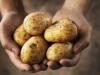 Krumpir ima važnu ulogu u europskim kuhinjama, ali prijete mu klimatske promjene