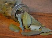 Čaj od lovorova lista otklanja gripu i bronhitis