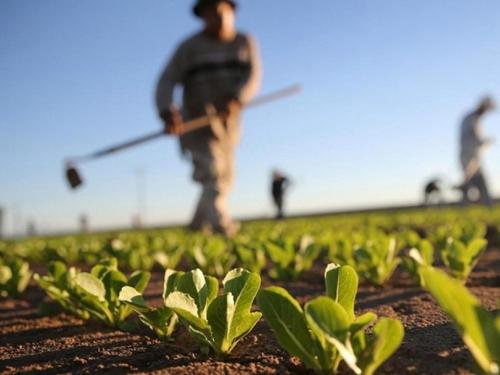 Poljoprivrednici koji izvoze dobili pomoć od 8,2 milijuna KM