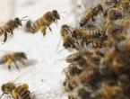 20.000 pčela napalo džamiju, nekoliko ljudi u bolnici