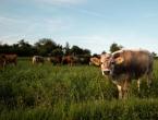 Počele pripreme za popis poljoprivrede: Poljoprivrednici puni sumnja