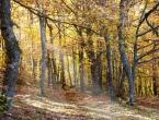 Danas je Dan šuma