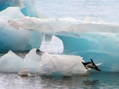 Na Arktiku zabilježeno rekordnih 38°C