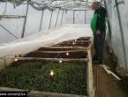 Mostarski zatvorenici proizvedu tone krumpira, rajčice i krastavaca