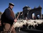 Na Islandu prosvjeduju protiv klanja janjadi