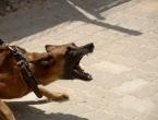 Širokobriježanku napao pas, njegov vlasnik ispitan u svojstvu osumnjičenoga