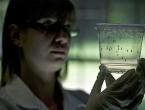 Znanstvenici razvijaju lijek za kontrolu rađanja komaraca