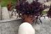 FOTO| David Ramčić iz Uskoplja pronašao gljivu od 4,5 kg
