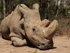 Sudan je posljednji mužjak svoje vrste, 24 sata čuva ga straža