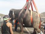 Slonovi nakon nesreće jurili po španjolskoj autocesti, jedan mrtav