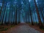 Kupres: U šumi pronađena svezana i pretučena osoba