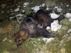 Na Blidinju ubijen medvjed