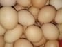 Poskupljuju i jaja