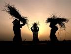 Poljoprivrednici traže plavi dizel: Bez jakog sela nema ni jake države