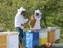 Pčelari upozoravaju – ove godine će biti puno krivotvorenog meda