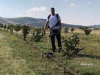 ŠUJICA: Plantaža lješnjaka daje prvi urod, a najmlađi zemljoradnik planira i širenje u budućnosti