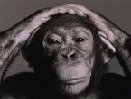 Čovječja ruka primitivnija od čimpanzine?