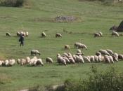Loša godina za ramsku poljoprivredu i stočarstvo?