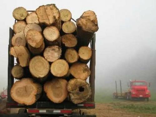BiH će zabraniti izvoz šumske građe