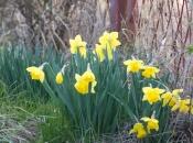 Prvih deset dana travnja sunčano i toplije, potom pogoršanje