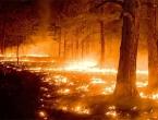 Katastrofalne posljedice toplotnog vala
