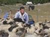 VIDEO: Bez žene nema uspjeha u ovčarstvu