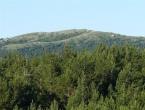 32-godišnjak poginuo prilikom sječe drva na Vranu