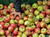 Jabuke vam brzo trunu? Uz ove trikove produljite im vijek trajanja