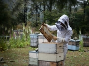 Hercegovački pčelari spremni za izvoz: Za kilogram pčelinjeg otrova 20.000 eura!