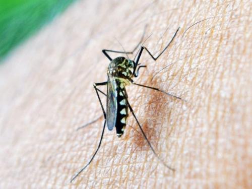 Bakterijama protiv komaraca