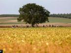 Poljska odbija primiti migrante unatoč pritiscima EU