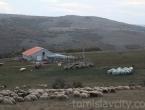 U duvanjskom kraju više od 1000 OPG-ova i više od deset tisuća goveda