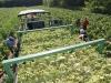 Talijani otkupljuju ukupnu duhansku proizvodnju tvrtke iz Orašja?