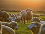 Općina Kupres zabranila ispašu stoke