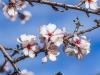 Preporuka poljoprivrednim proizvođačima – za povrtlarske i voćarske kulture