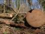 Drvar: Nastradao maloljetnik u sječi drva