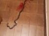 Novi Travnik: Djevojčica u sobi zatekla zmiju od metar